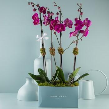 Orchidette
