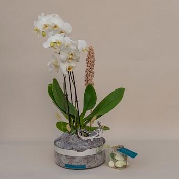 Plantaruimera