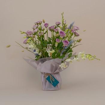 Purple Blushee