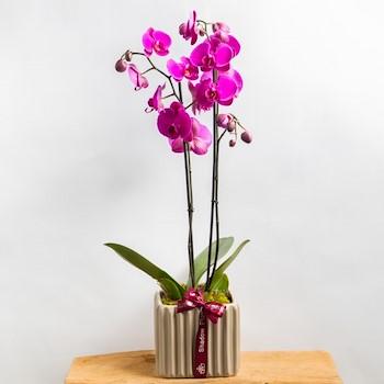 Purple Orchid 22