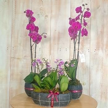 Clay Vases Set