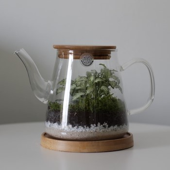Sai Tea Pot