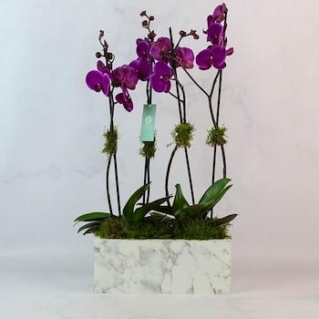 Marble Vase 17