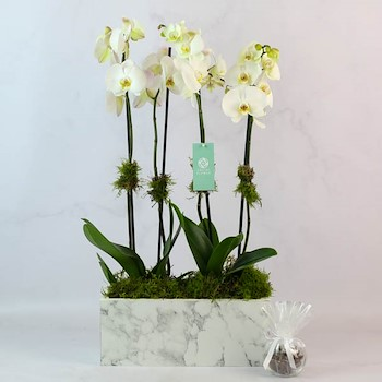 Marble Vase 20