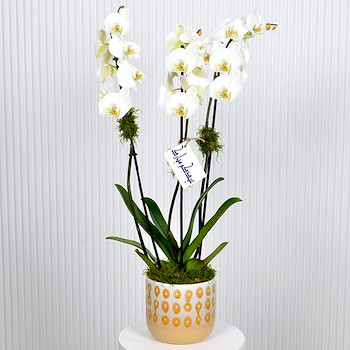 Eid Orchid 2