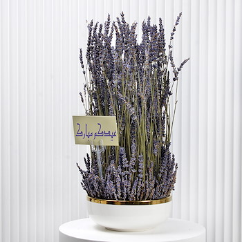 Lavender Beauty 2