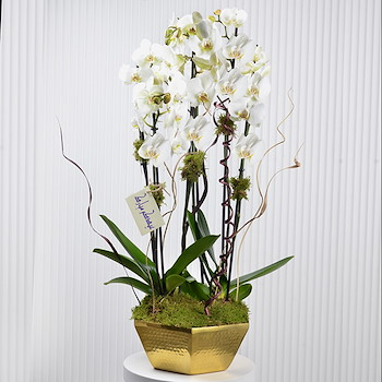 Orchids Forest