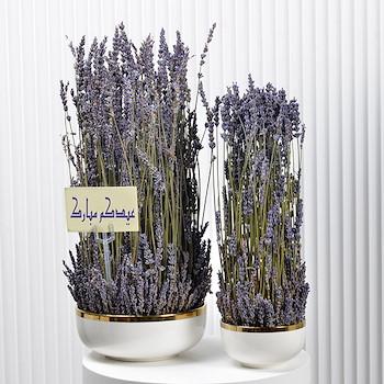 Double Lavender