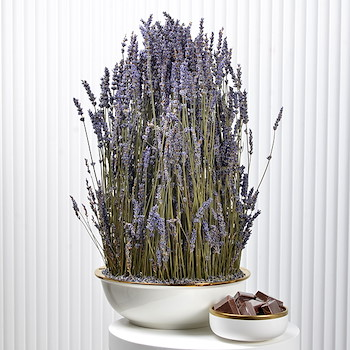 Beauty Lavender