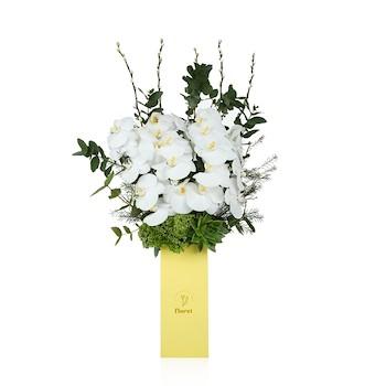 Fabulous White Orchid