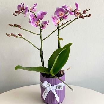 Orchids Marbella