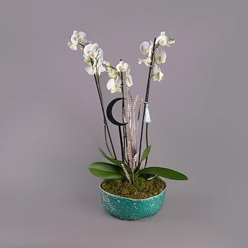 Ramadhan Orchid II