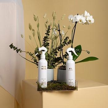 Grow & Perfumes Haya 2