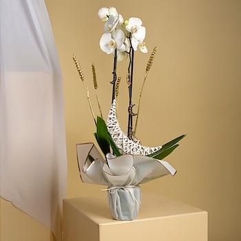 Ramadan Orchids