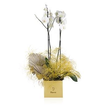 Floret Orchid