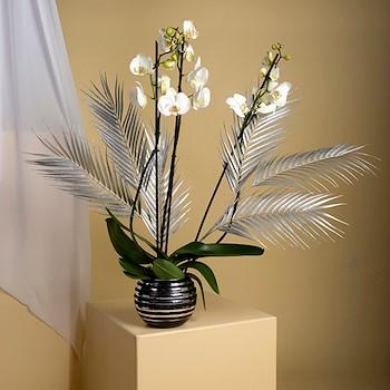 Orchids Palm