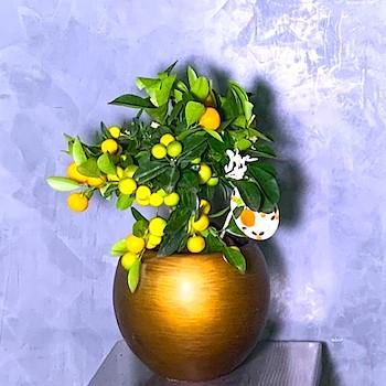 Citrus Gold 4