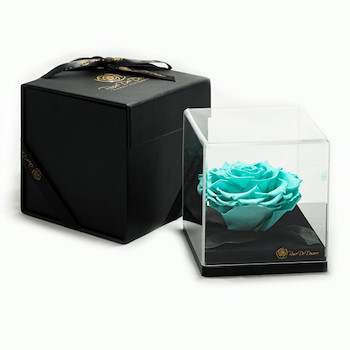 15% OFF -  Treasure Turquoise