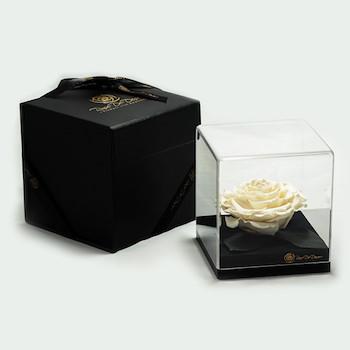15% OFF - Treasure White