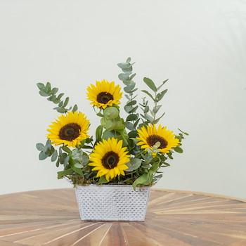 Sun Flower Love II