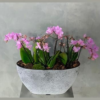 Mini Pink 3