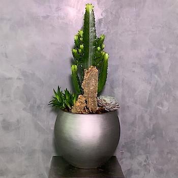 Cactus Garden 2