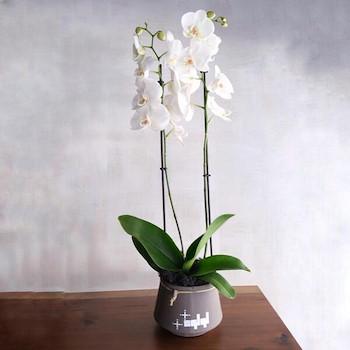 Orchids Pots