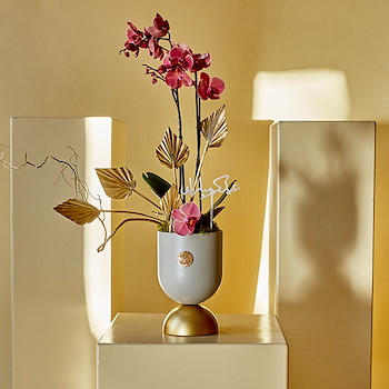 Cherry Orchids