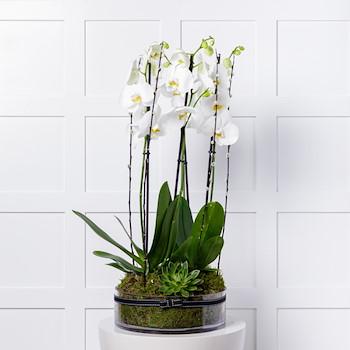 Merci Plant 4