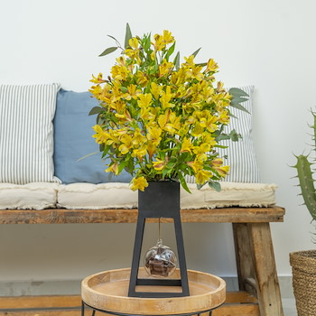 25% OFF - Only Yellow II