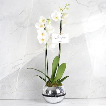 Merci Plant 16