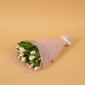 Gracias Tulip I