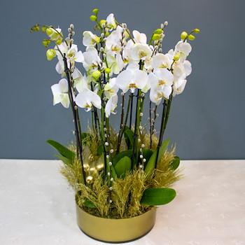 Inland Flowers