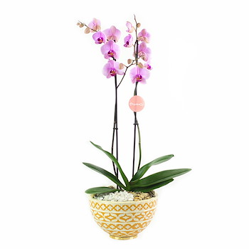 Purple Orchids V
