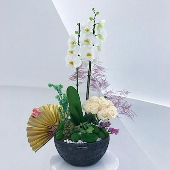 Japanese Orchid Garden