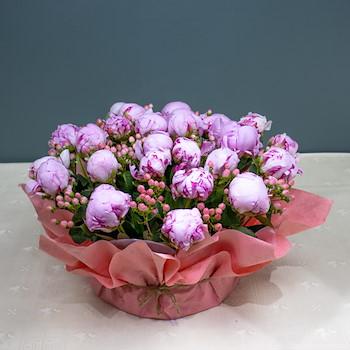 Flower Hearts III