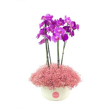 Flower Arrangement Vase