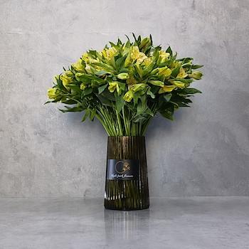 Elpis Yellow