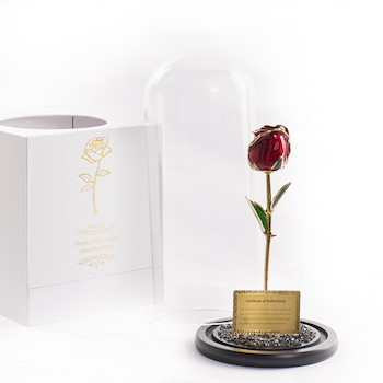 Gold Plated Tulip Dome