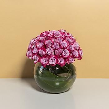 Purple Rosalinda