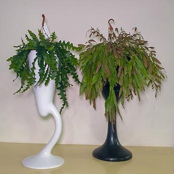 Fiber Glass Vase