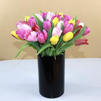 Florence Tulip