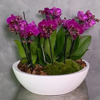 Mini Orchids Vase