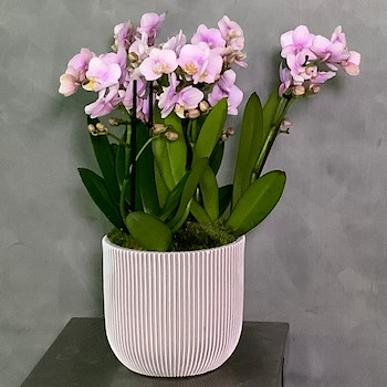 Groove Orchid Vase