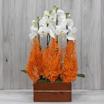 Orange Elegant II