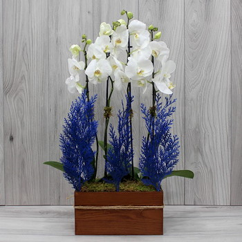 Blue Elegant II