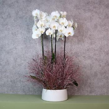 White Rosita