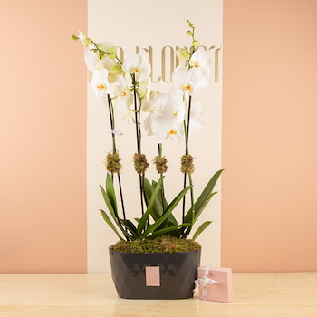 25% OFF - Orchidian Ways 2