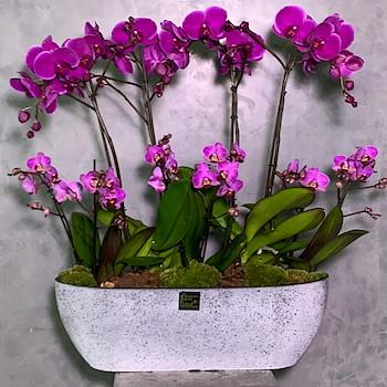Purple Concrete Vase