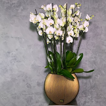Groove Gold Vase